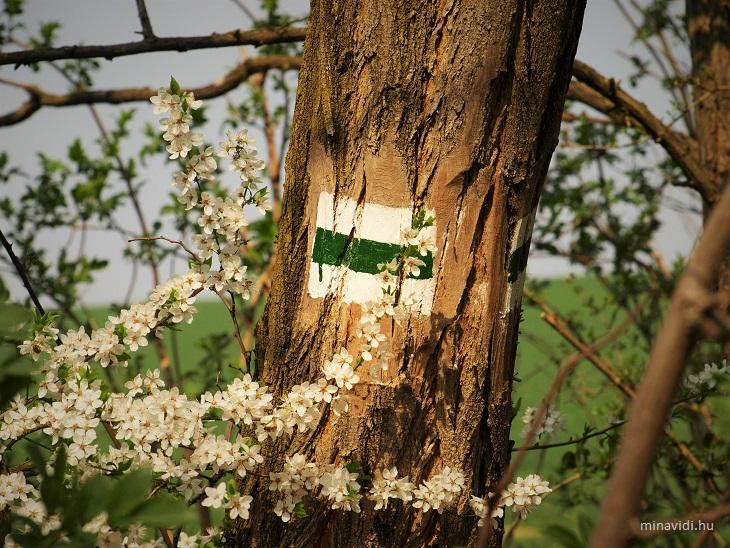 zöld jel